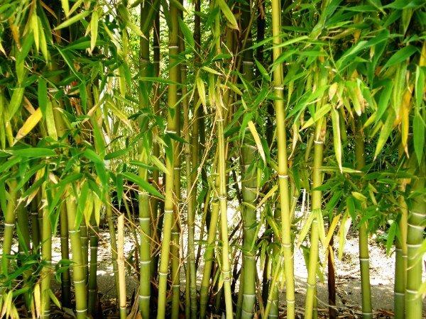 Les avantages des matelas à mémoire de forme bambou